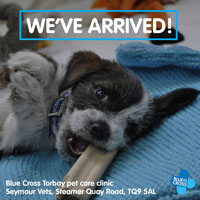 Blue Cross pet care clinic